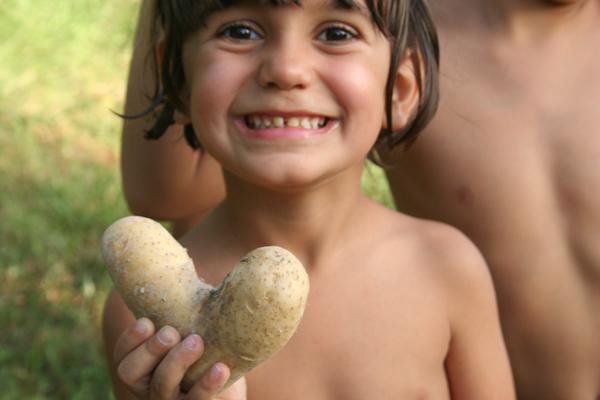 patata-siria